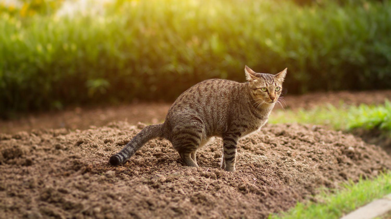 uønskede katte i haven